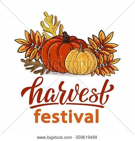 Harvest Festival Hand Drawn Lettering Text With Autumn Leaves And Pumpkins. Rowan And Oak Leaves Wit