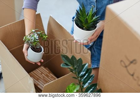 High Angle Close Up Of Unrecognizable Young Woman Packing Plants To Cardboard Boxes While Moving To