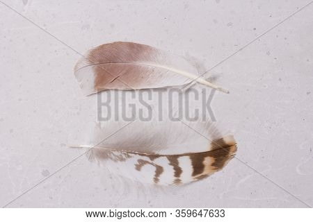 Two Fluffy Tender Pockmarked Feathers And Feather Lies On A Light Gray Modern Background. The Concep