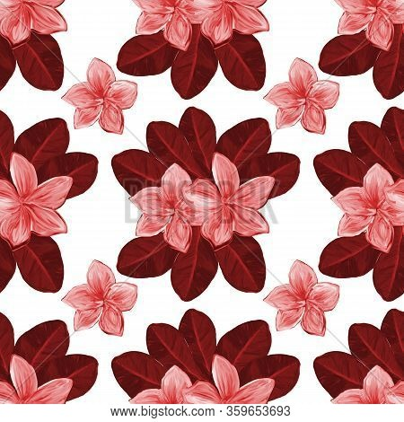 Frangipani Plumeria Tropical Flowers On White Background. Seamless Pattern Background. Tropical Flor
