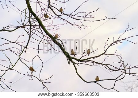 Seven Sparrow Sitting On Tree Branches Distanced From Each Other On Sky Background. Social Distance