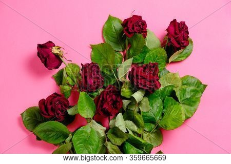 Bouquet Of Red Wilted Roses On A Pink Background