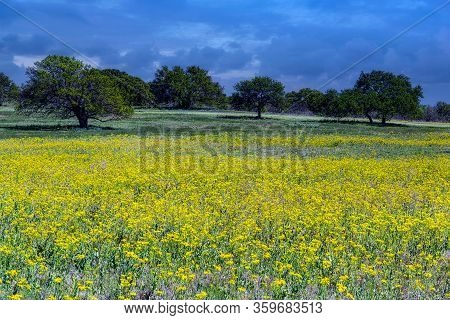 A Field Of Spring Wildflowers Near San Antonio, Texas