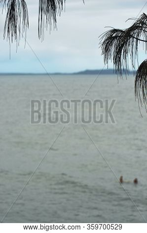 The Leaves Of A Pine Tree Frame A View Of A Bay, With A Headland In The Distance. The Water, And The
