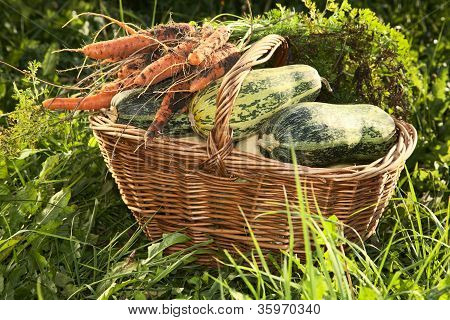 Wattled Basket With Vegetable Marrows,carrots On A Green Grass