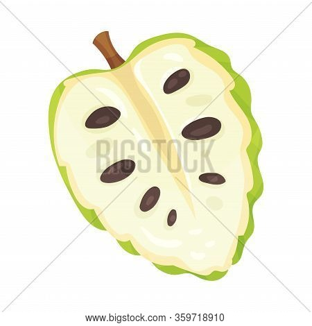 Soursop Fruit Or Guanabana Cross Section Showing Creamy White Flesh And Black Seeds Vector Illustrat