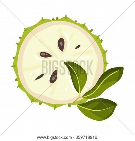 Halved Soursop Fruit Or Guanabana With Dark Green Rind Covered With Thick Thorns Vector Illustration