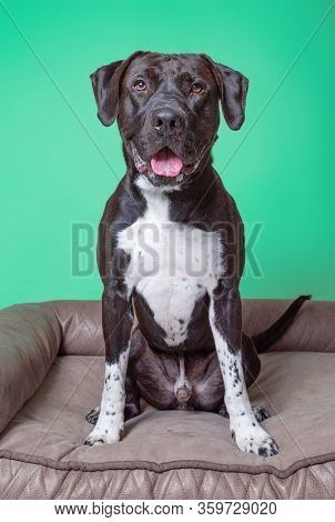 cute studio photo of a shelter dog on a isolated background