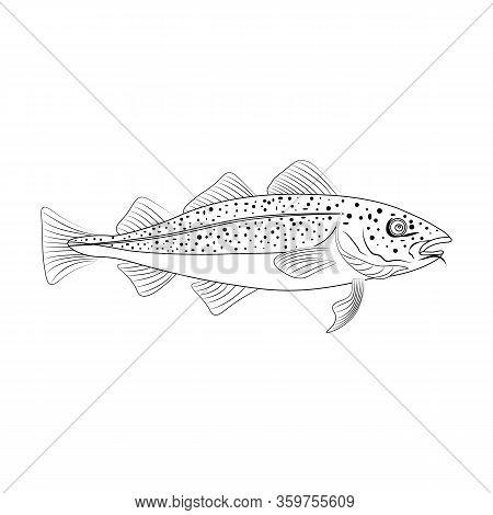 Codfish Fish, Organic Sea Fish Illustration Outline