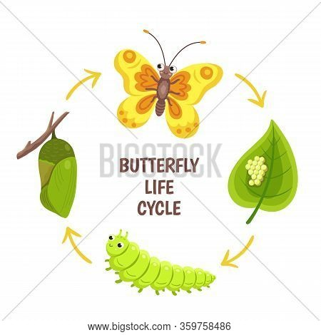 Butterfly Life Cycle. Insect Emergence, Transformation Or Metamorphosis. Caterpillar Development Sta