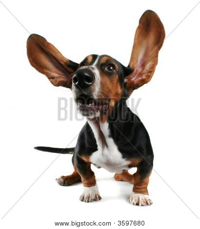 Flapping Ears