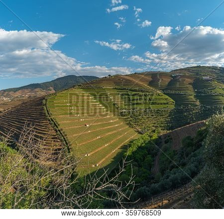 View Of The Beautifull Torto River Valley With Vineyards And Terraced Slopes In The Douro Region, Fa