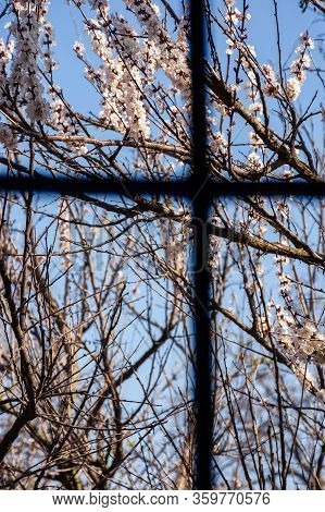 View Out Of The Window. Quarantine Concept. Covid-19 Spring Blossom Banned, Stay Home