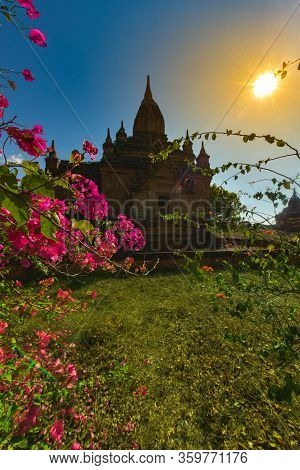 Bagan Myanmar Bougainvillea Flowers And Beautiful Stupa