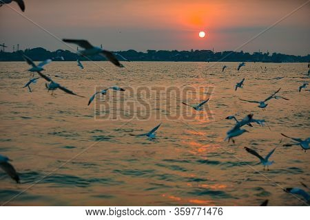 Seagull In Flight Over The Yangon River At Sunset Myanmar