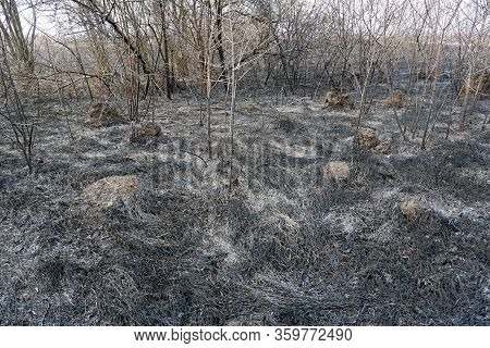 Asches Of The Burnt Grass And Burnt Trees After A Wildfire. Global Warming, Climate Change, Protect