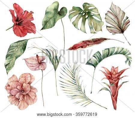 Watercolor Tropical Set With Flowers And Leaves. Hand Painted Hibiscus, Monstera, Anthurium, Guzmani