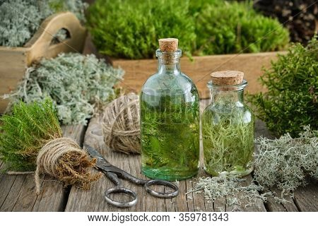 Healthy Infusion Or Potion Bottles, Wooden Boxes Of Healthy Common Haircap Moss And Lichen, Moss On