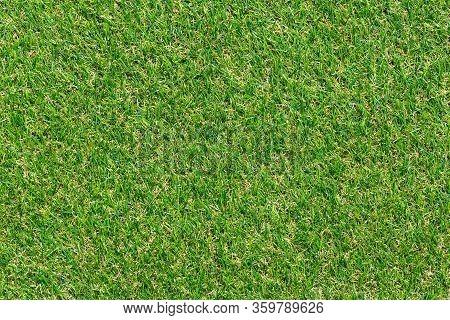 Natural Green Grass. Grass Texture Or Grass Background.
