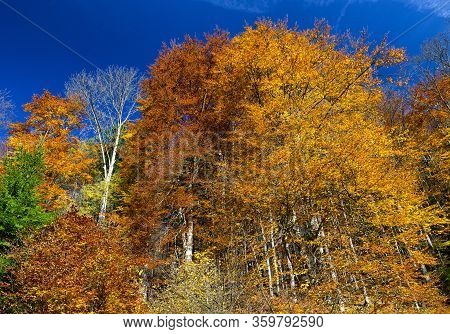 Autumn Trees With Colorful Leaves In Forest