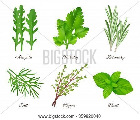 Herbs Realistic. Green Food Species Aromatic Product Ingredients Parsley Rosemary Sage Onion Vector