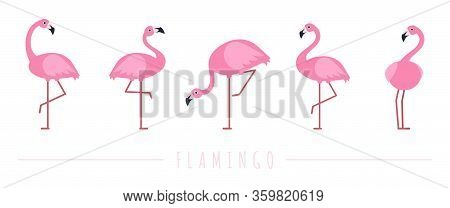 Pink Flamingo. Exotic Tropical Birds Characters. Isolated Wildlife Animals Vector Set. Exotic Wildli