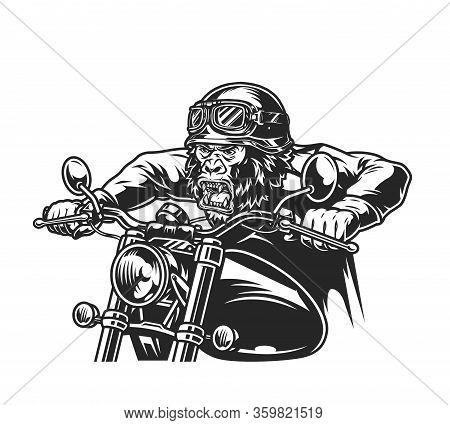 Animal Head Motorcyclist Vintage Concept With Ferocious Gorilla Head Biker In Moto Helmet And Goggle