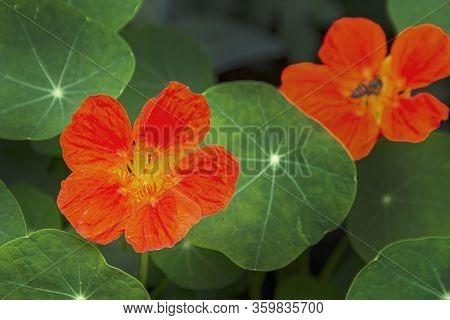 Beautiful Red Flower On Rain Forest Garden