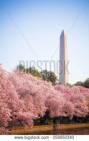 Washington Dc – April 4, 2019: Cherry Blossom Festival With Washington Memorial Around The Tidal Bas