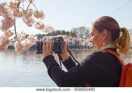 Cherry Blossom Festival Around The Tidal Basin