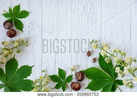 Spring Frame For Text With Chestnut Leaves, Chestnut Flowers. Background For Banner With Chestnut Le