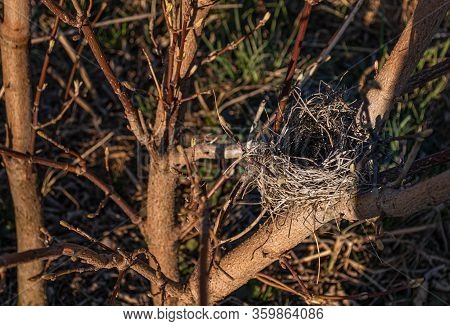 Nest In The Branches Of A Tree