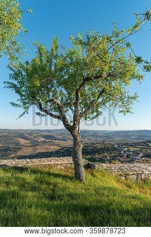 Almond Tree In Numao Castle. Council Of Vila Nova De Foz Coa. Portugal. Douro Region