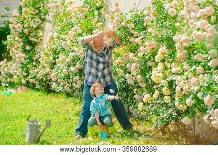 Planting Flowers. Grandfather And Grandson In Beautiful Garden. Grandson And Grandfather Spend Time