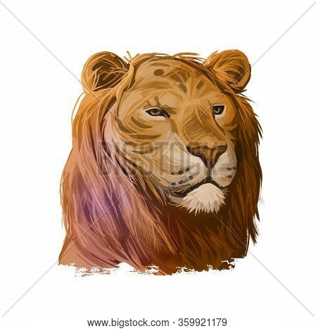 Tigon Animal Watercolor Portrait In Closeup. Animalistic Drawing Of Tigon, Hybrid Mammal. Wild Car O