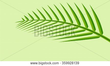 Coconut Leaf Simple Isolated On Green Pastel Soft Color, Illustration Of Coconut Leaves, Palm Stalk
