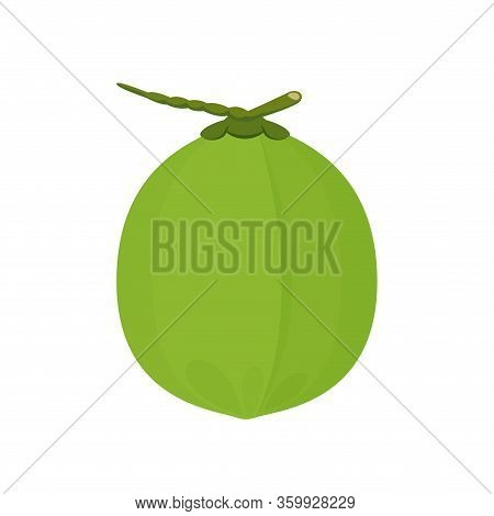 Coconut Fresh Young Isolated On White Background, Illustration Coconut Green For Healthy Food Menu F