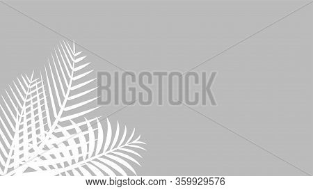 Coconut Leaf White On Grey Wall For Background, Palm Tree Leaves White Shadow, Floral Leaves Shadow