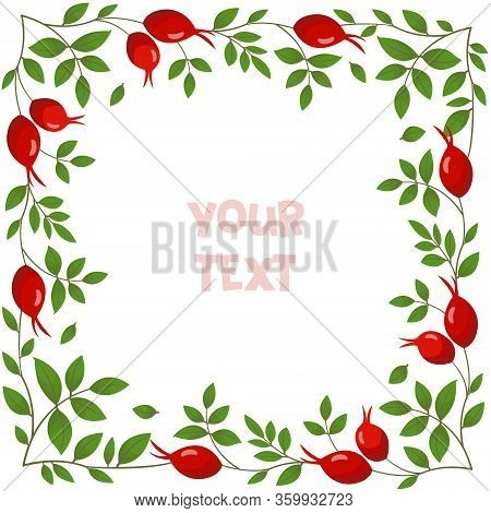 Rose Hip Frame; Square Frame With Rose Hip For Greeting Card, Invitations, Wedding Cards, Posters, B