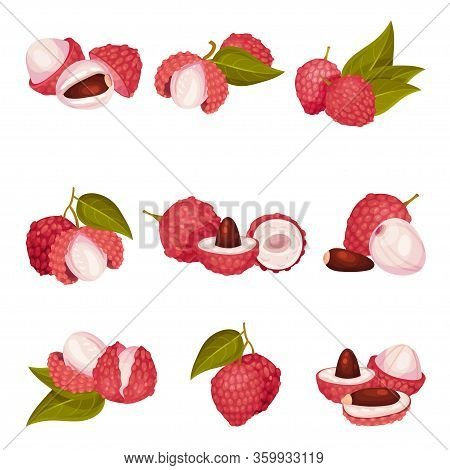Tropical Lychee Fruit With Pink-red Rind And Brown Seed Vector Set