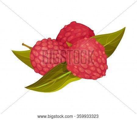 Litchi Fruit With Rough Pink-red Rind And Green Leaves Vector Illustration