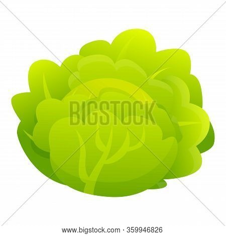 Salad Cabbage Icon. Cartoon Of Salad Cabbage Vector Icon For Web Design Isolated On White Background