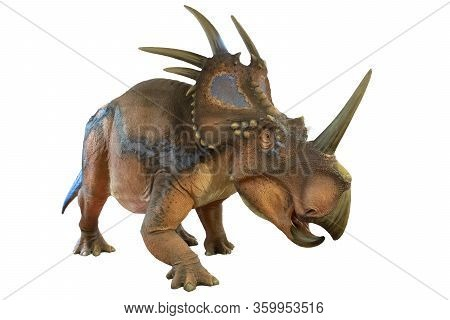 Portrait Of Styracosaurus Isolated On White Background.styracosaurus Is An Herbivore Dinosaur Lived