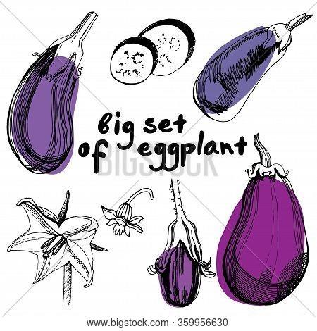 Eggplants Set. Hand Drawn Sketch Style Eggplants. Fresh And Sliced Aubergine. Vintage Illustration O