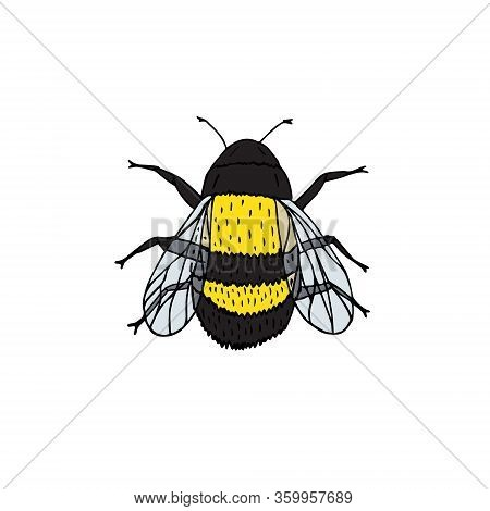Vector Hand Drawn Doodle Sketch Colored Bumblebee Bee Isolated On White Background