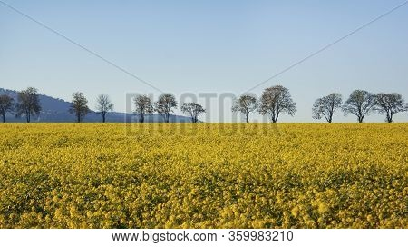 Yellow Field Of Oilseed Rape, Trees On The Horizon, Mountains And Blue Sky
