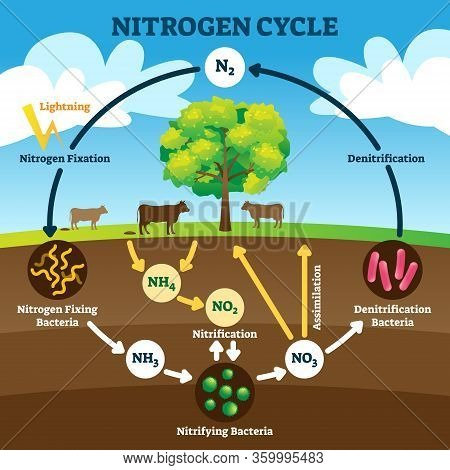 Nitrogen Cycle Vector Illustration. Labeled N2 Process Biogeochemical Explanation. Educational Diagr