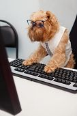 Dog Manager works for a computer looking at the monitor poster