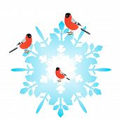 Bullfinch sitting on an abstract snowflake. Illustration on white background. poster