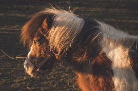 Horse In The Autumn Sun On A Field At Dawn With A Special Eye